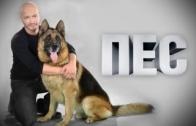 Пёс 1 серия